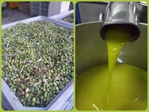 Olive & Olio